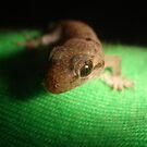 gecko green by rainbowvortex