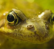 Frog by Peter Towle