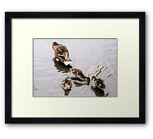 Mother and Baby Ducklin's Framed Print