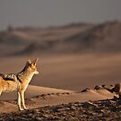 Black-backed jackal&#x27;s golden view by Owed to Nature