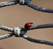 LadyBug at Crossroad by Helder Ferreira