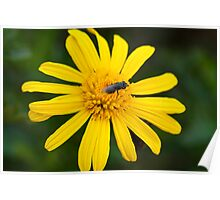 That Yellow Flower is mine Poster