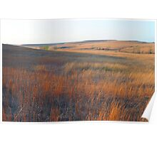 Tall Grass Prairie - Kansas Poster