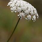 White Flower by Helder Ferreira