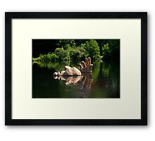 A Great Day for a Swim Framed Print