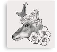 Beautifully Endangered - Pronghorn Canvas Print