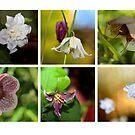 Flowering Scotland by asm1