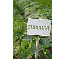 Zucchini - Eagle Heights Community Garden Photographic Print