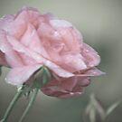 Pink Splinder by Pat Moore