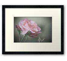 Pink Splinder Framed Print