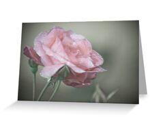 Pink Splinder Greeting Card