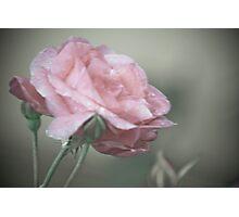 Pink Splinder Photographic Print