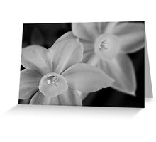 Ethereal paperwhite blossoms Greeting Card