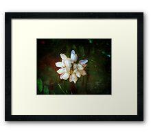 WhiteClover Framed Print