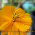 Orange Beauty 2 by ldermid75