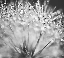 Dewdrop on Dandelion Black and White  by BobbiFox