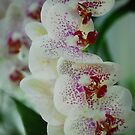Orchid Heaven by Sunshinesmile83