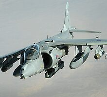 Cute Harrier by wwwildlife