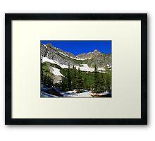 Conifer trees Framed Print