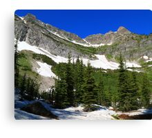 Conifer trees Canvas Print