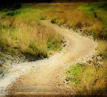 Busby Head track. by Lynne Haselden