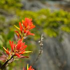 Indian Paintbrush Bokeh 1 by Michael Garson