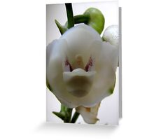 Dove Orchid Greeting Card
