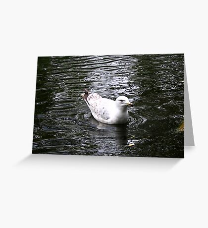 Duck in water. Greeting Card