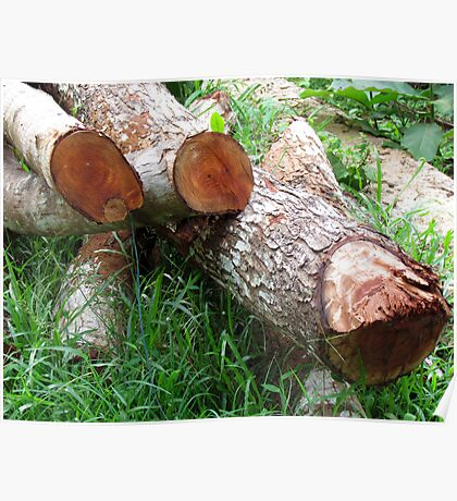 Logs of wood Poster