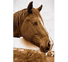 A Horse with No Name Photographic Print
