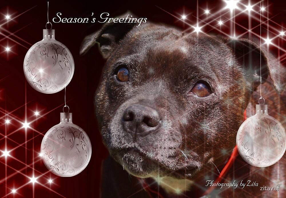 CC92 - Staffordshire Bull Terrier by zitavaf