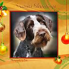 CC100 - German Wire Haired Pointer by zitavaf