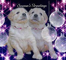 CC101 - Golden Retriever Puppies by zitavaf