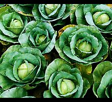 array of cabbages by Nilesh Gawde