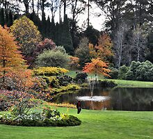 Bisley Gardens - Mt Wilson NSW Australia by Phil Woodman
