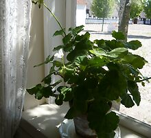 Old Danish House Plant by HeklaHekla