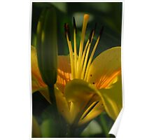 Yellow-orange lily with lighting Poster