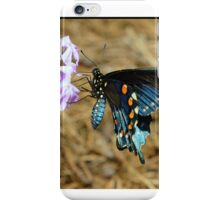 Spicebush swallowtail butterfly. iPhone Case/Skin