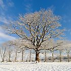 Oak Tree in the Snow by Mark Zytynski