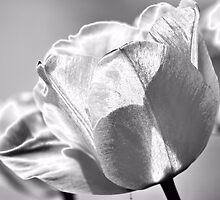 Glowing Tulips - Downtown Elizabeth City NC by Denise Bulone