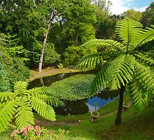 Tree ferns by Gaspar Avila