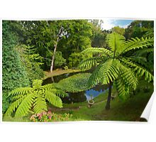 Tree ferns Poster