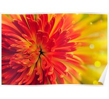 orange-red flower Poster