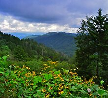 Spring in the Smokies by filmdalight