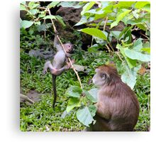 Monkey trouble Canvas Print