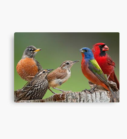 Songbird Summit Canvas Print