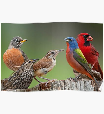 Songbird Summit Poster