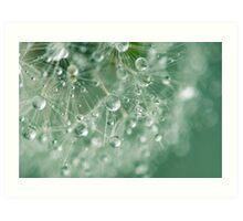 Dewdrops on Dandelion - 8 Art Print