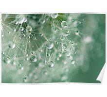 Dewdrops on Dandelion - 8 Poster