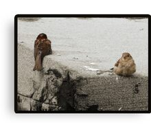Guess whos in a huff? Canvas Print